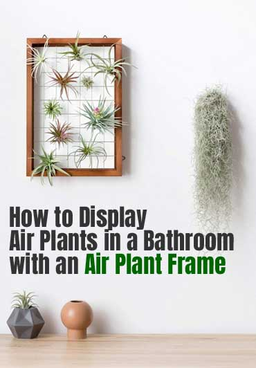 Mkono Air Plant Frame Review  & DIY Air Plant Planter