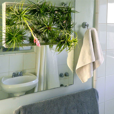 Tillandsia Air Plant Decorating Ideas In The Bathroom