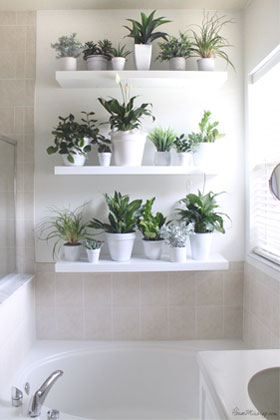 Floating Bathroom Shelves Whats Best For Plants