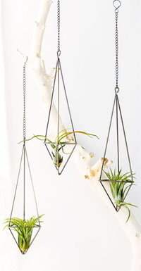 Hang Air Plants From The Bathroom Ceiling