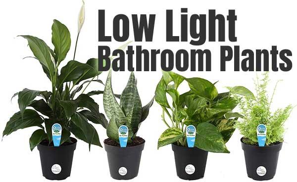 Low Light Bathroom Plants - What's the Secret?