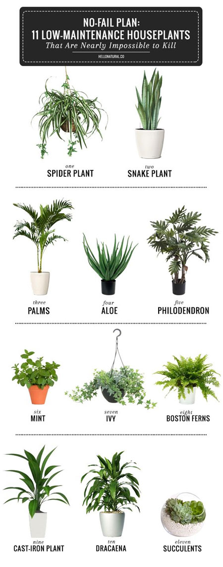 Good Plants For Bathroom. 11 Low Maintenance Houseplants Best Plants For Bathroom