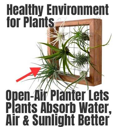 Mkono Air Plant Frame Review Diy Air Plant Planter